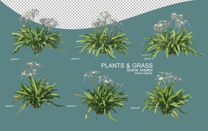草和灌木排列的三维渲染