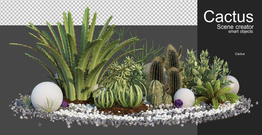 3d渲染各类仙人掌排列