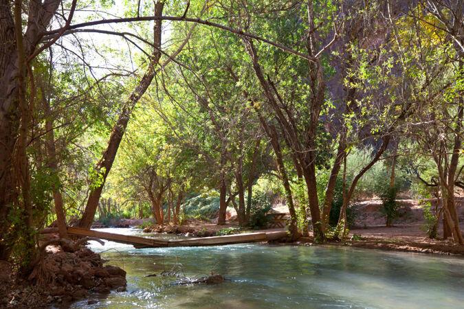 森林里美丽的小河