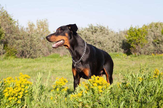 一只可爱的小狗在草地上玩耍的选择性聚焦镜头
